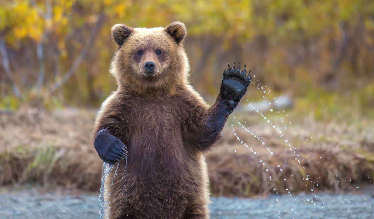 waving-bear-contact-form-green-house