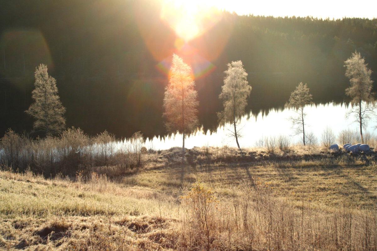 """Det kan være vakkert på landet: Rimfrost på vår """"egen"""" innsjø"""