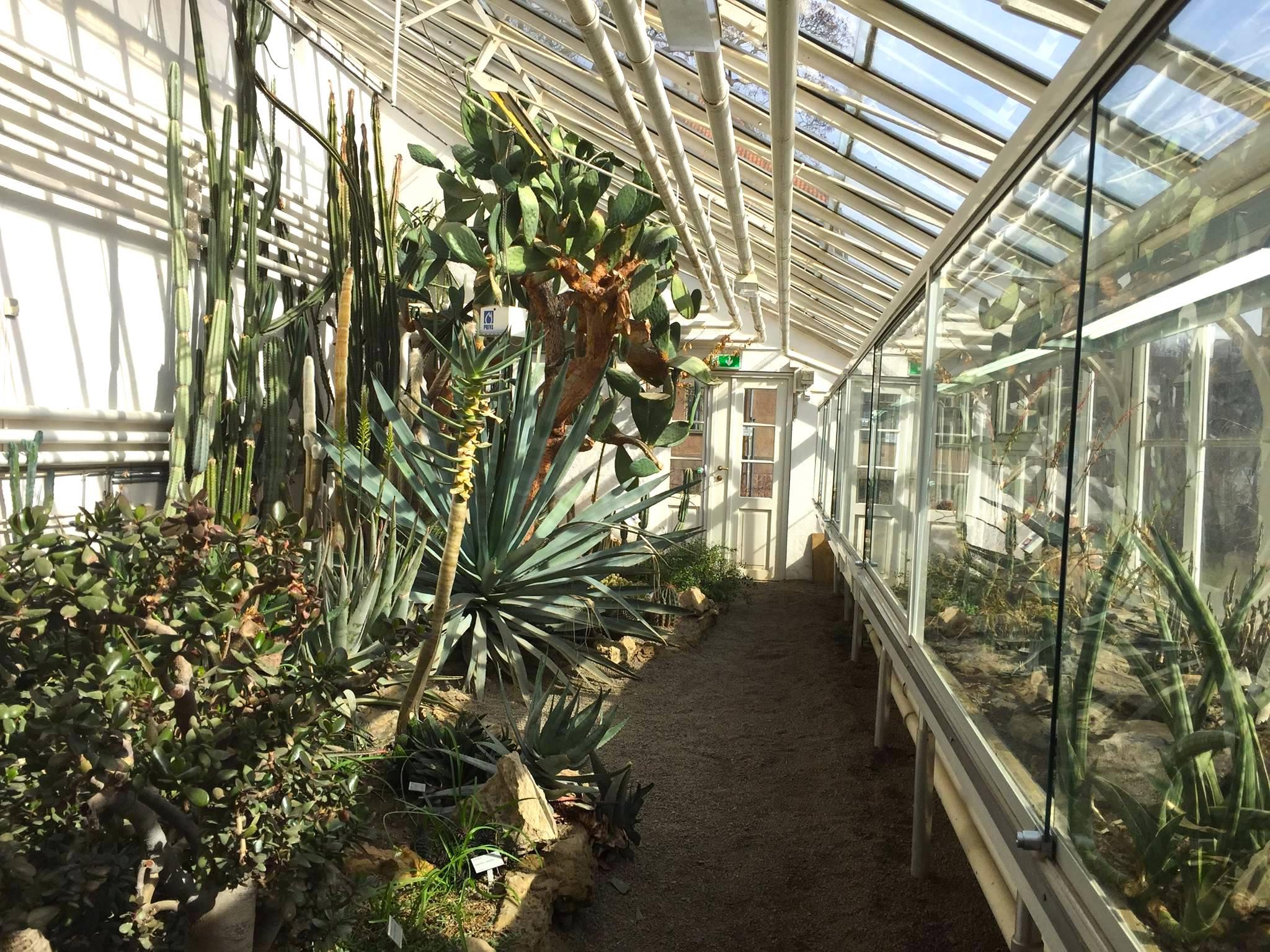 Veksthusene i Botanisk Hage har karbonfrie kaktuser.