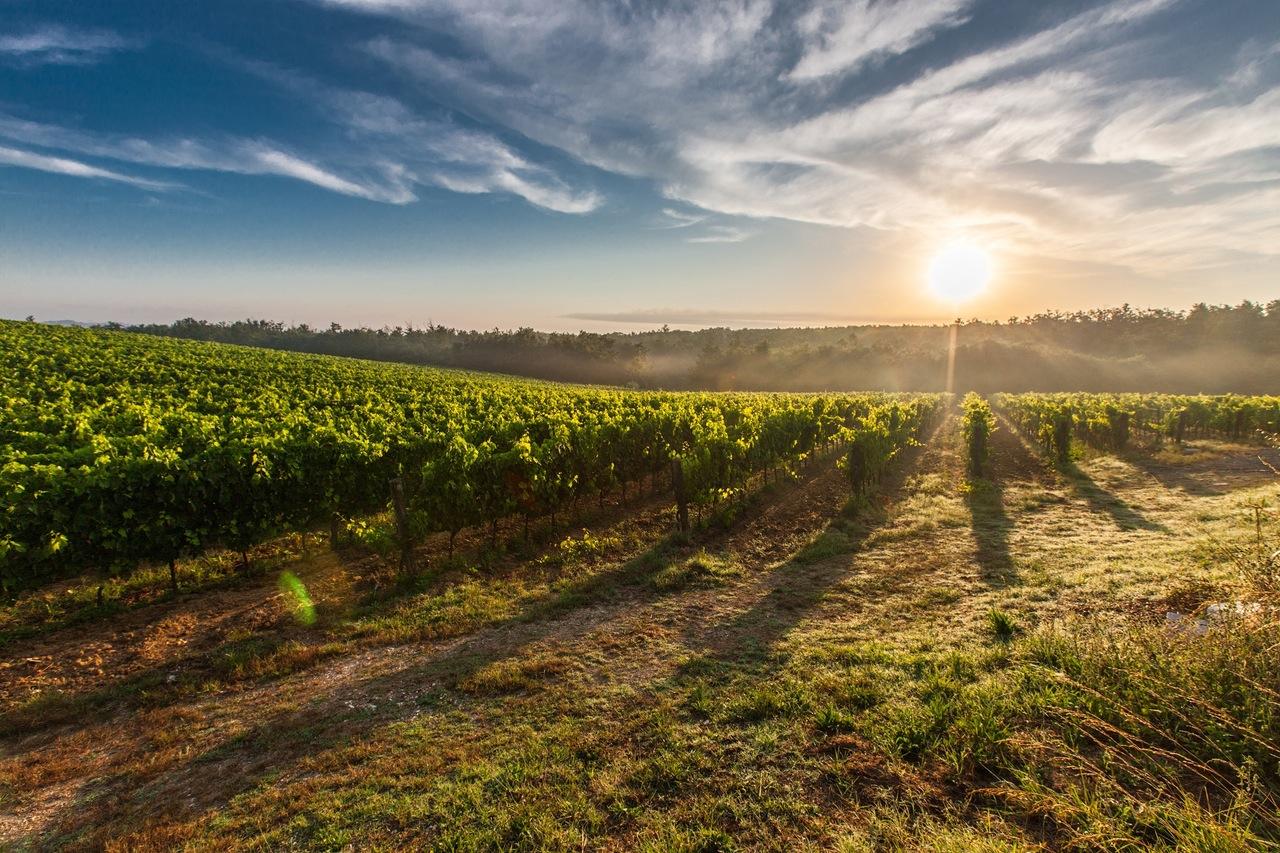 tuscany-grape-field-nature