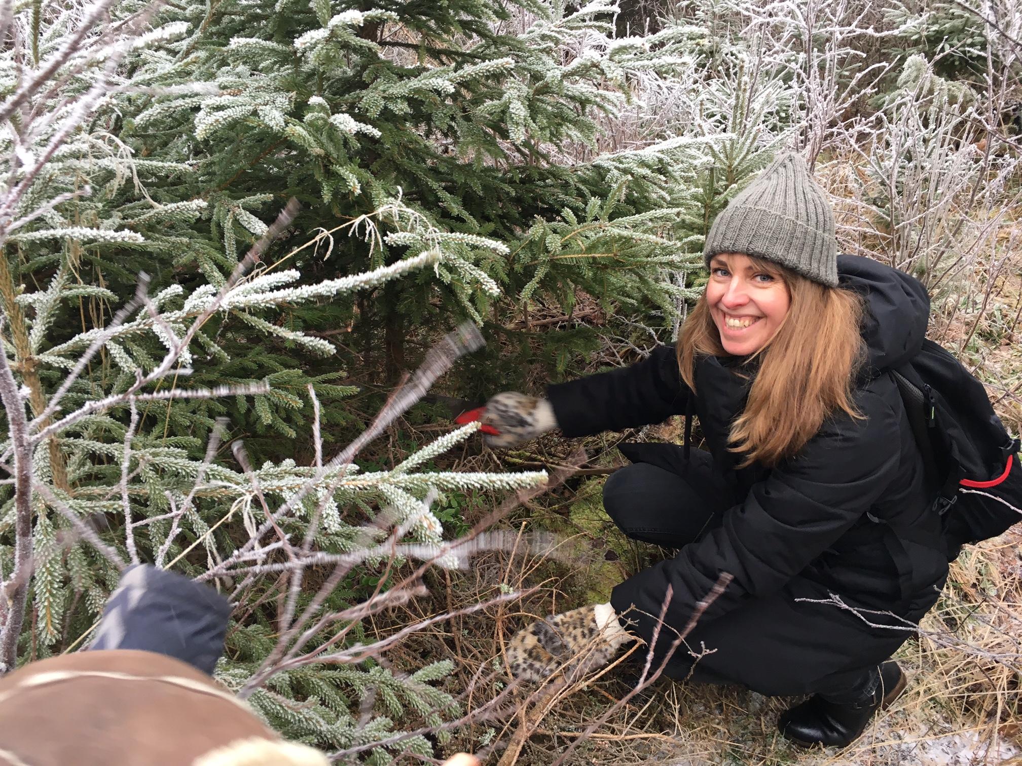 selvhogst-juletre-christmas-tree-hasle-gard