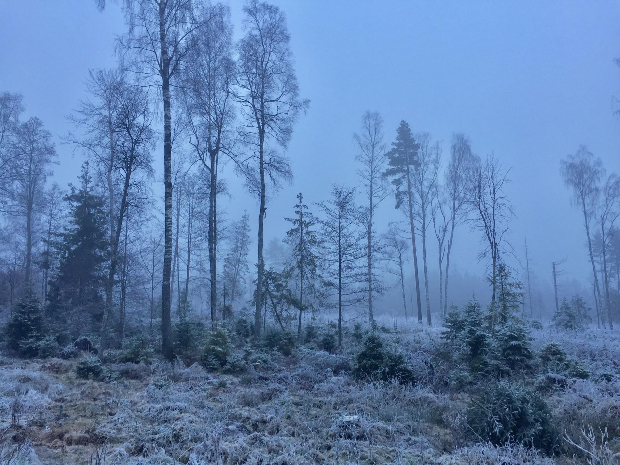 skog-forest-hasle-gard-vinter