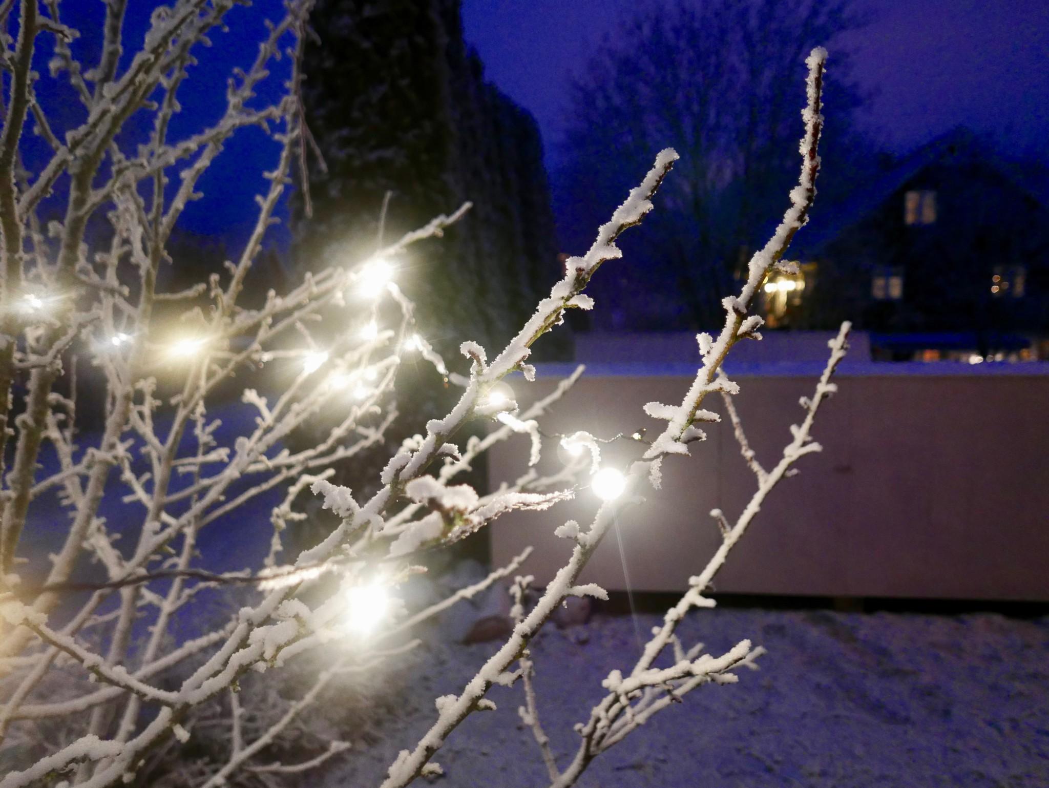 tree-christmas-julelys-vinter-rimfrost
