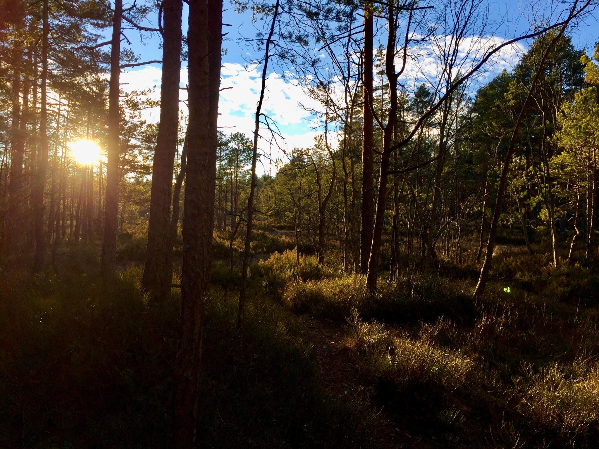 forest-skog-nesodden