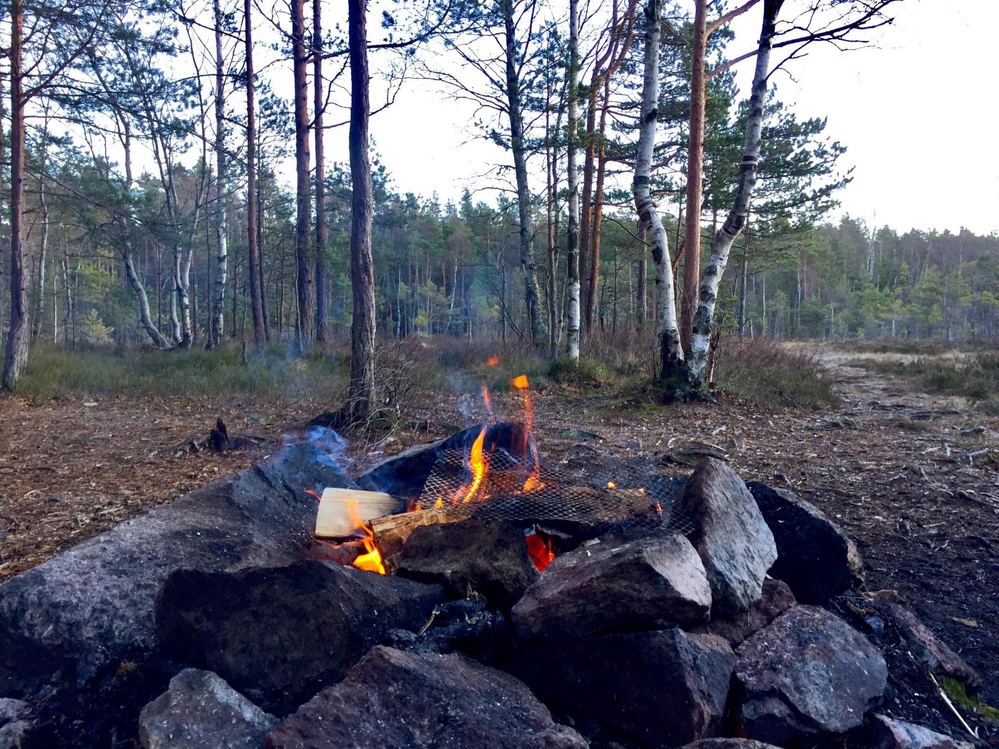 bonfire-skog-nesodden