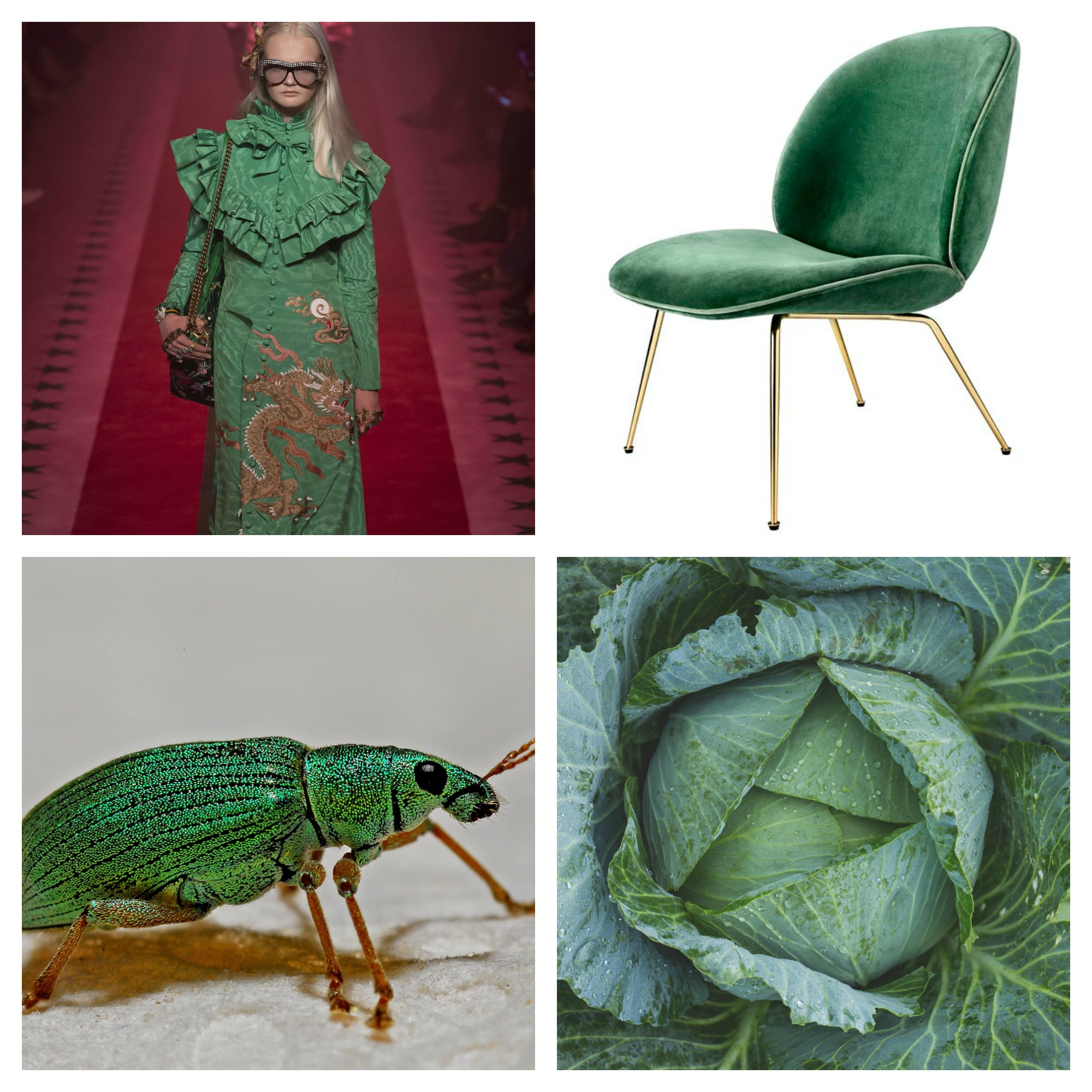 collage-gucci-cabbage-gubi-beetle