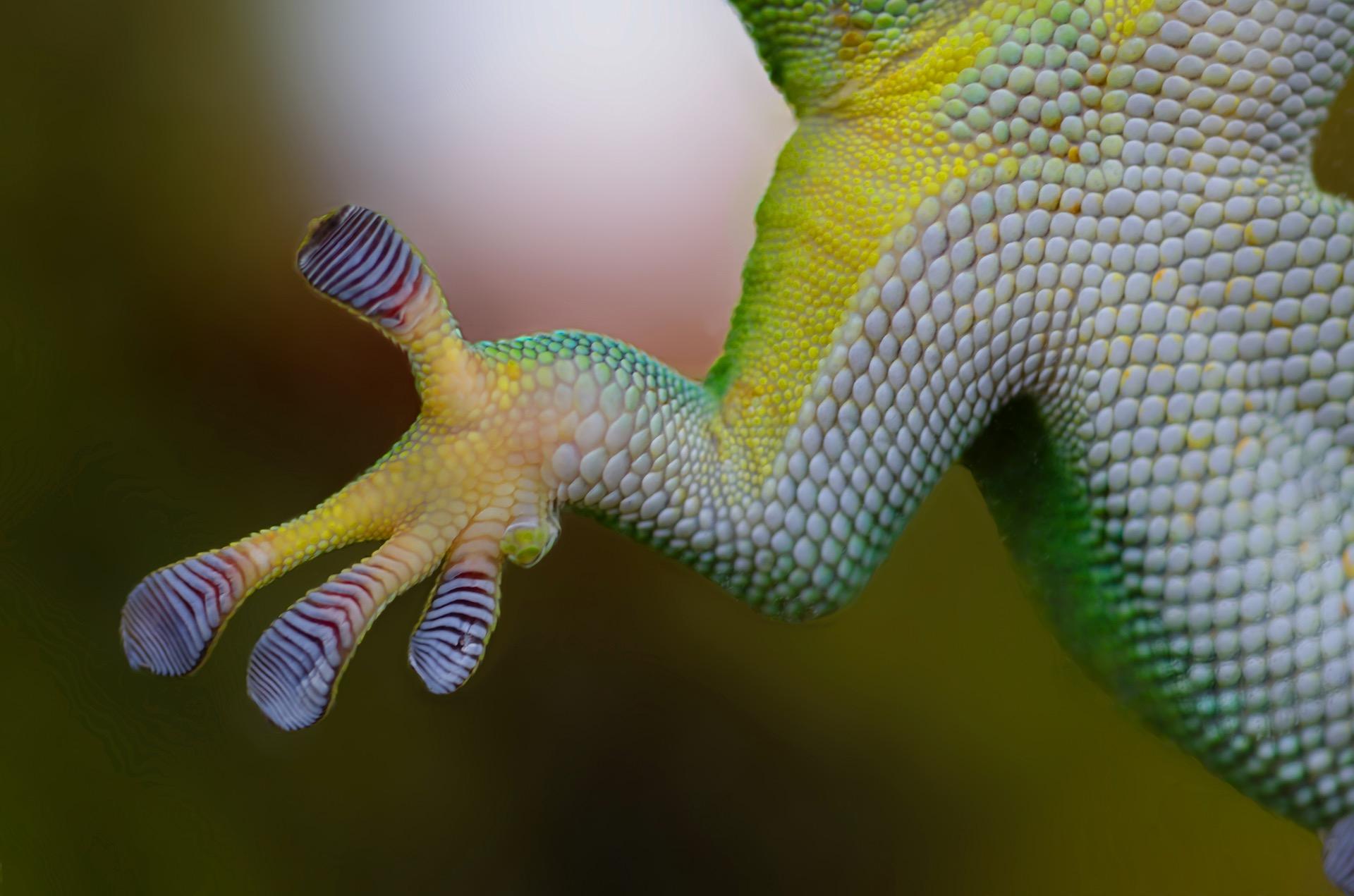 nature-hand-animal-frog-greenery
