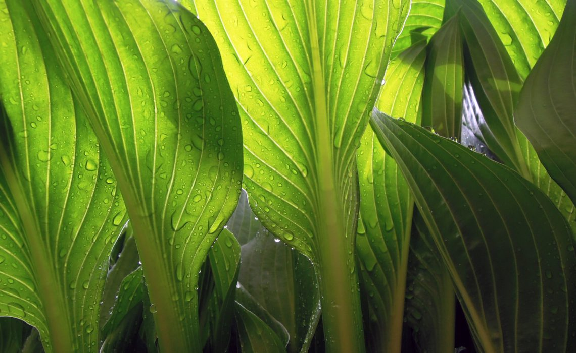 greenery-leaves-plant
