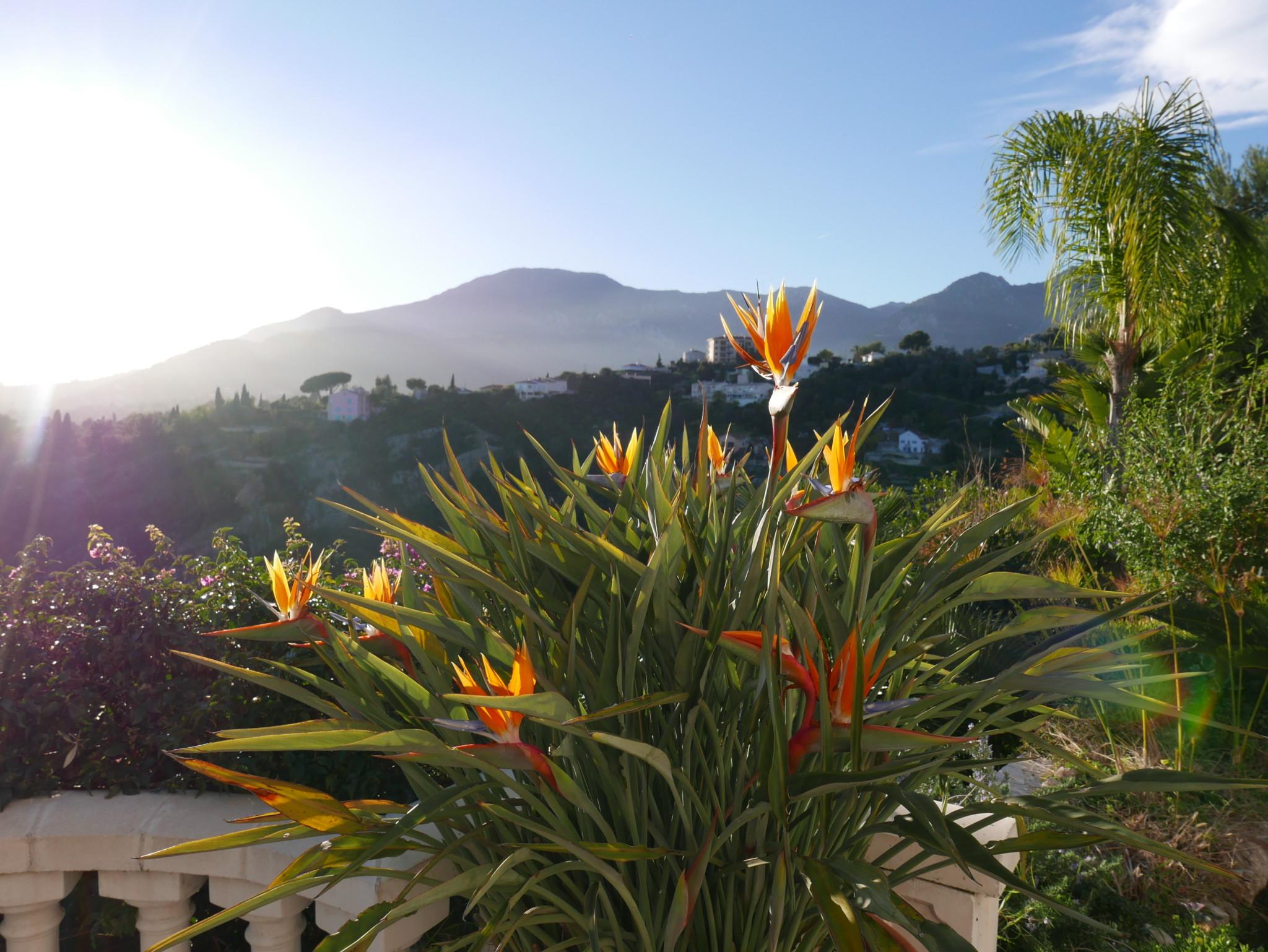 flower-menton-view-utsikt-terrasse