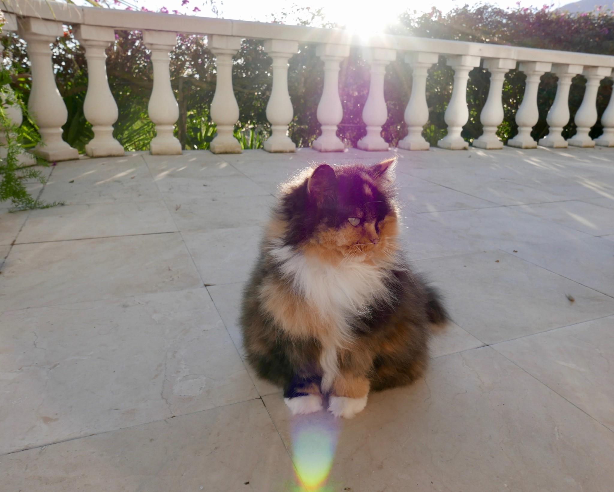 riviera-katt-menton-terrasse