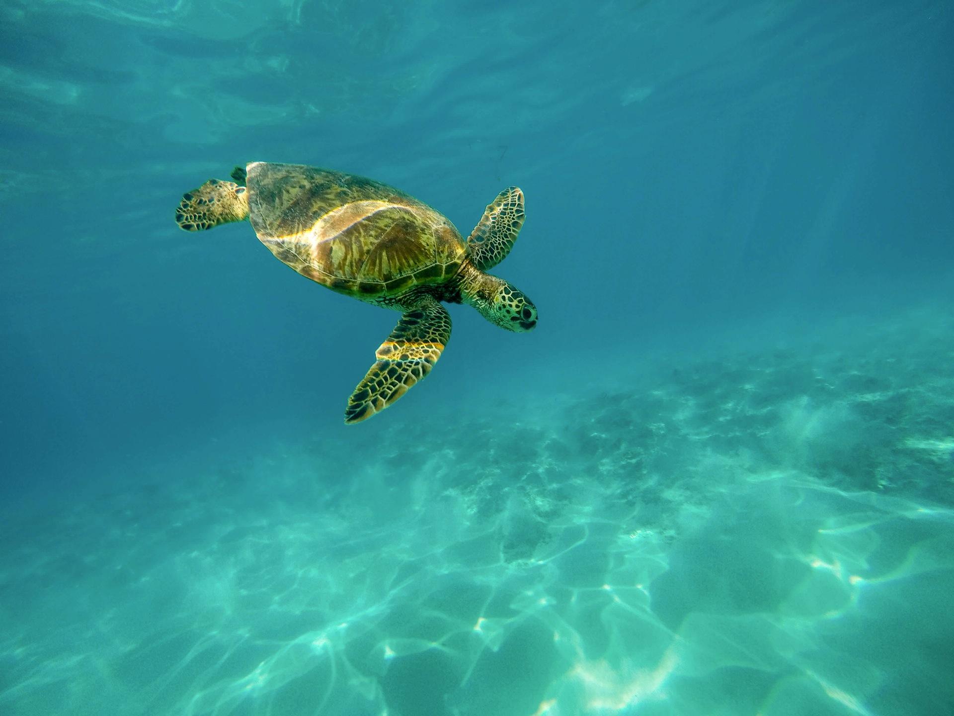 pexels-anja-stang-green-house-sea-turtle