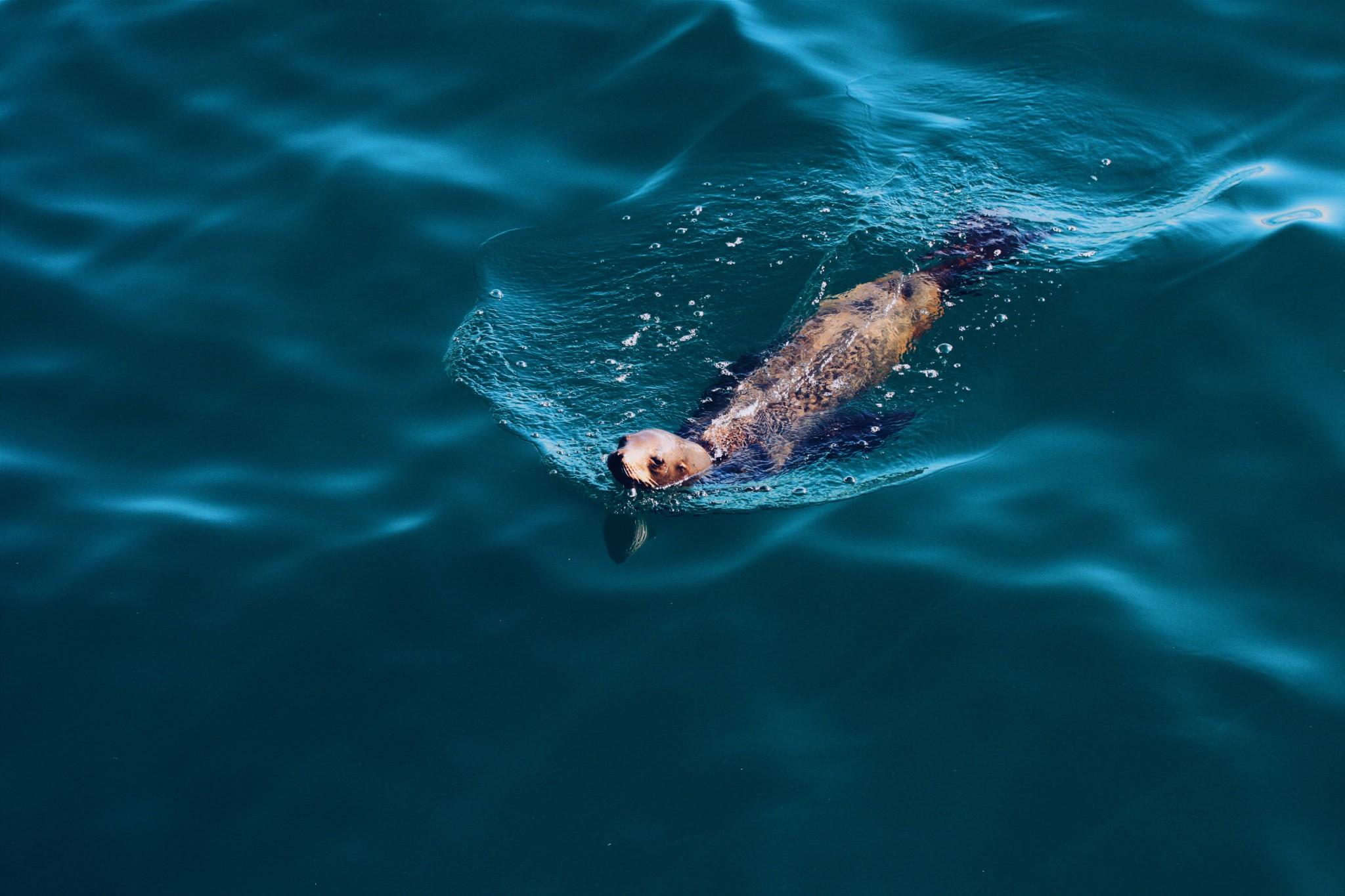darius-k-sel-livet-i-havet-ocean