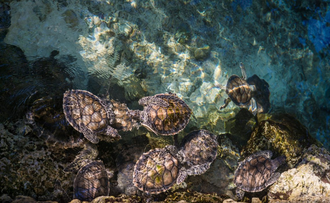 ricardo-braham-unsplash-ocean-life-plastic