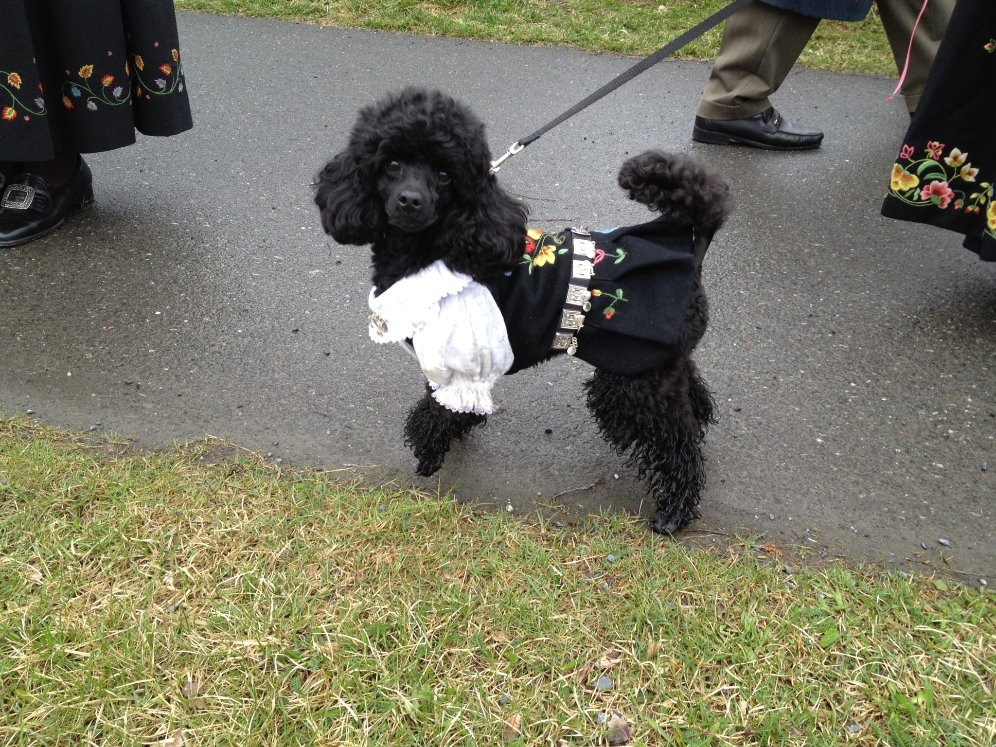 canine costume-gausdal uniform-National-Anja rod
