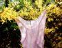 le-backhand-merino-silk-blomsterfesten-green-house