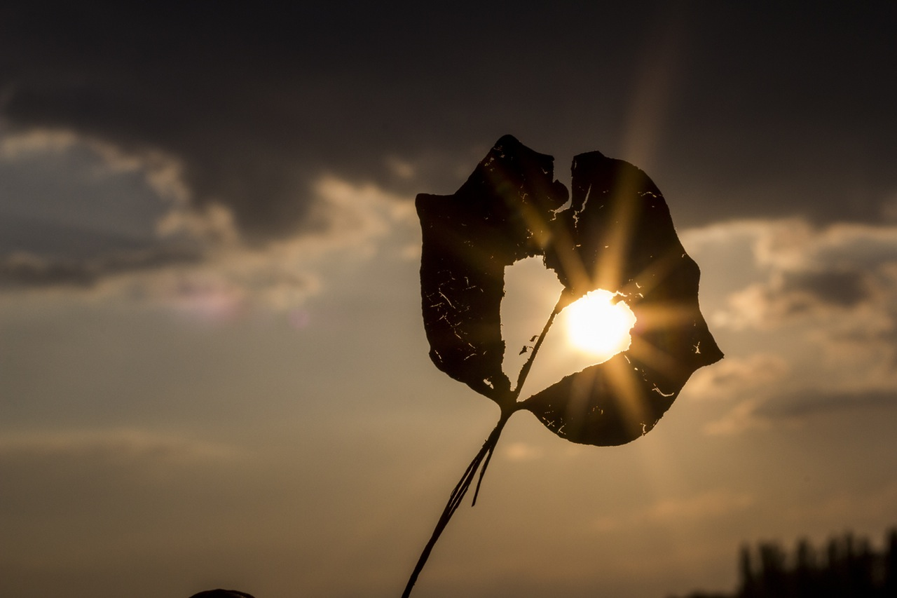 sun-heart-autumn-leaf-solstrom-otovo