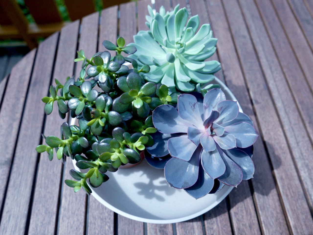 sukkulenter-succulents-bowl-granit-money-tree-terrace