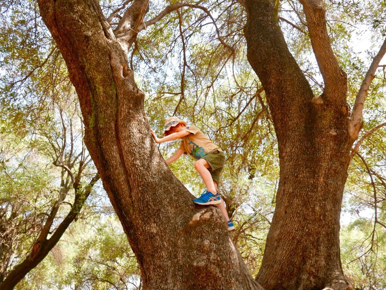 kids-climbing-olive-trees-parc-du-pian-menton