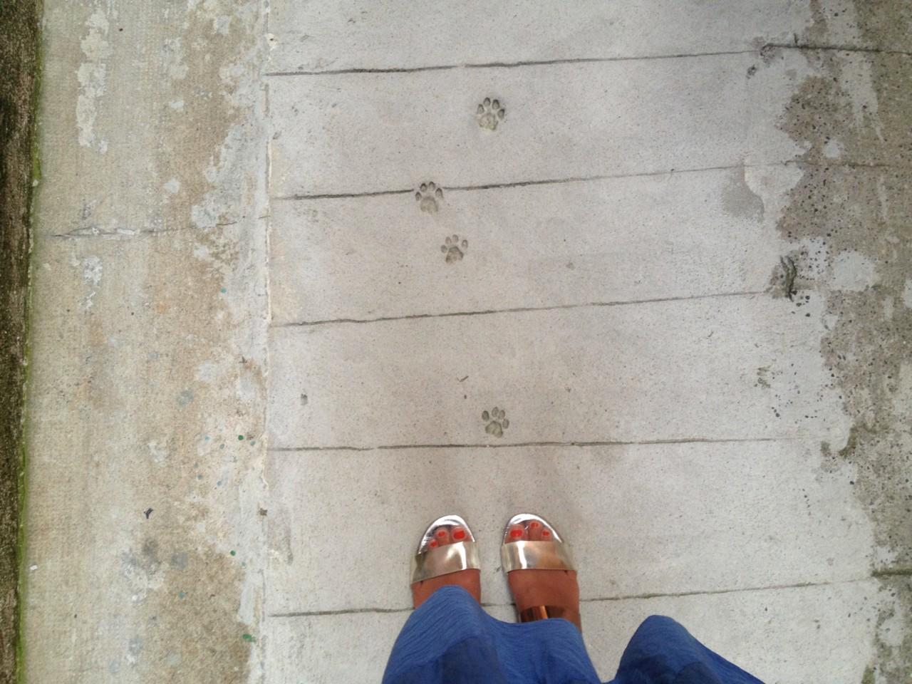 sandaler-katt-menton-gamleby-cote-azur