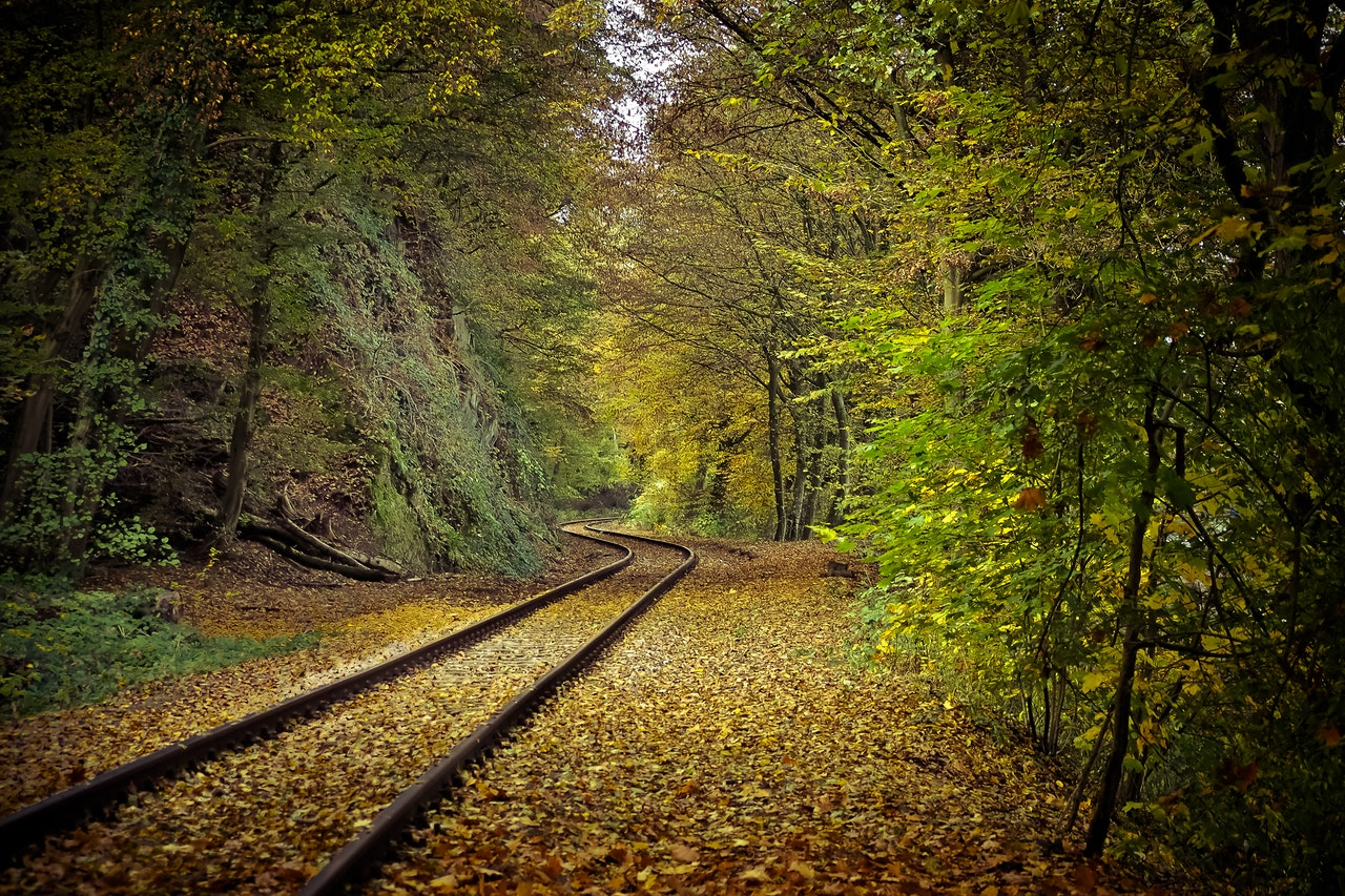pexels-railway-trees-leaves-green-house-by-anja-stang