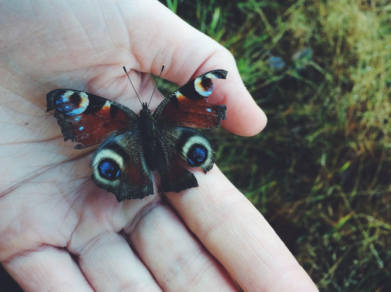skadet-sommerfugl-karen-rosenberg-olsen-green-house