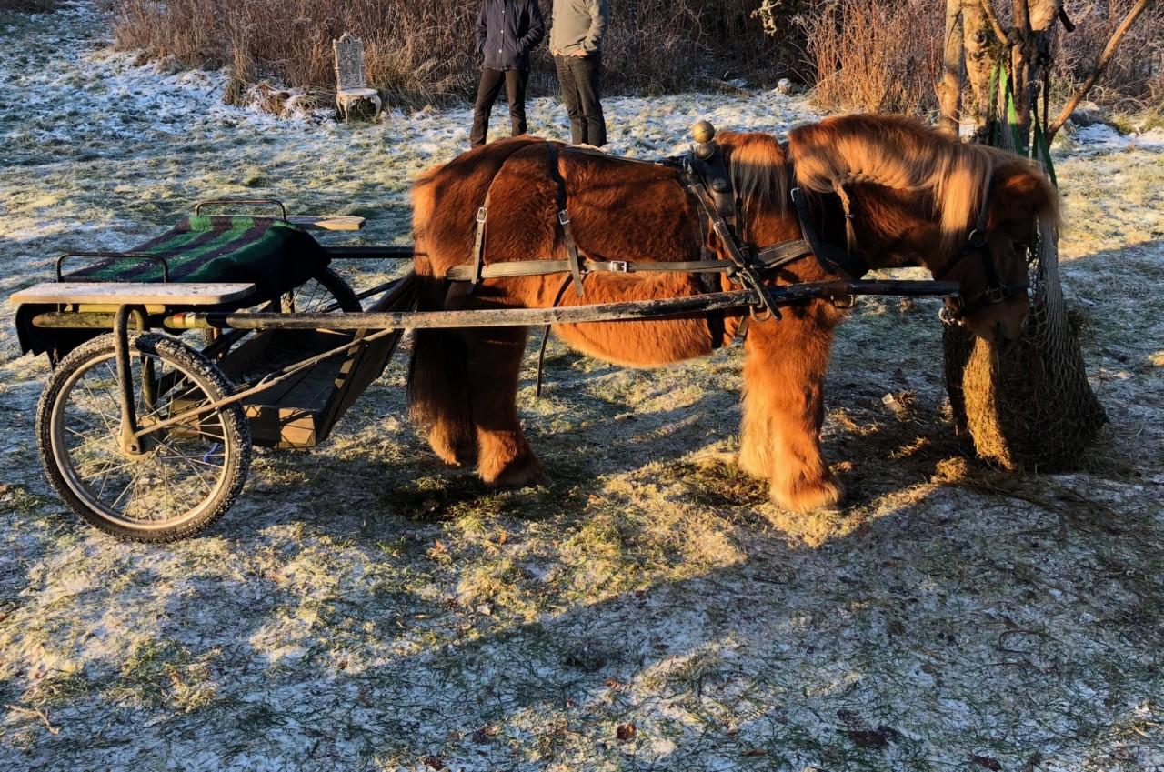 ponny-ridning-lindehagen-nesodden-green-house
