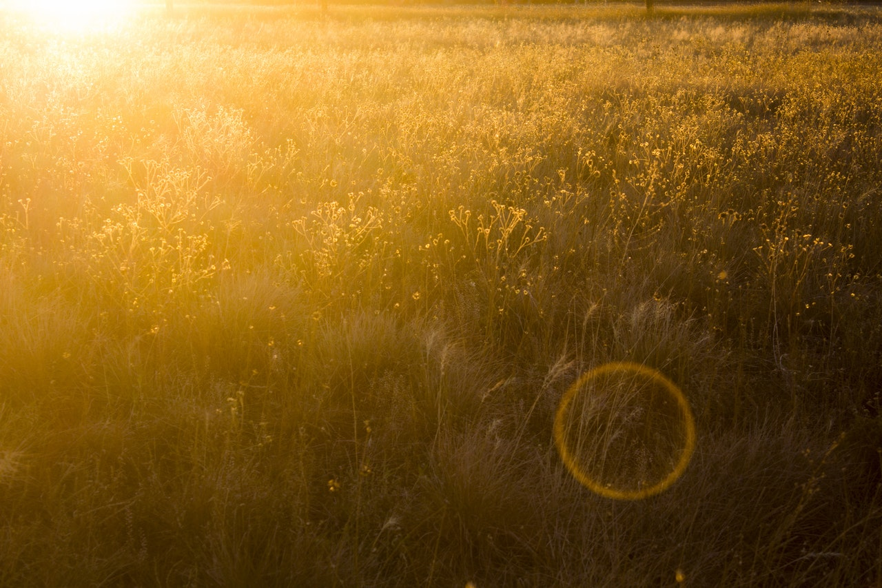 evening-sunset-field-yellow-golden-green-house-gul