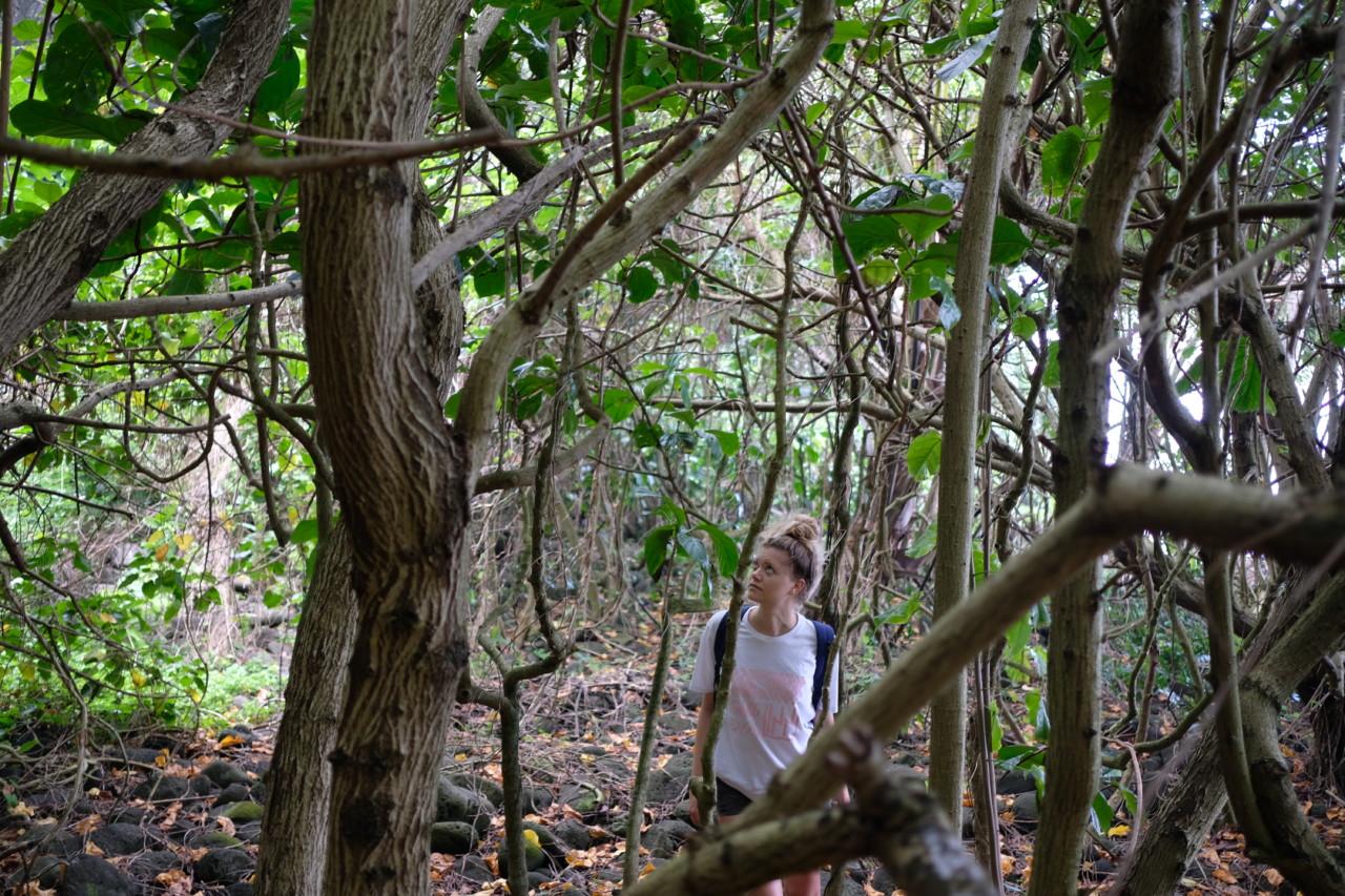 regnskogen-blir-borte-maggie-alva-green-house