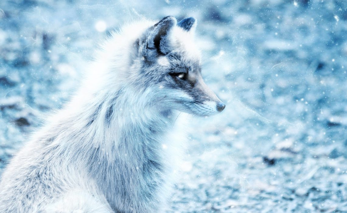 silver-fox-rev-pels-fur-green-house-pexels