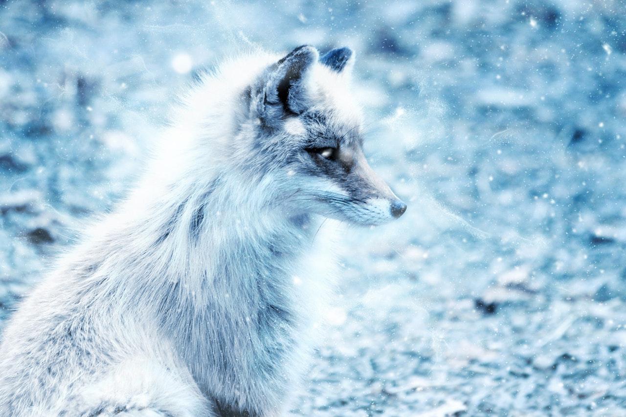 Det nytter å snakke om pels!