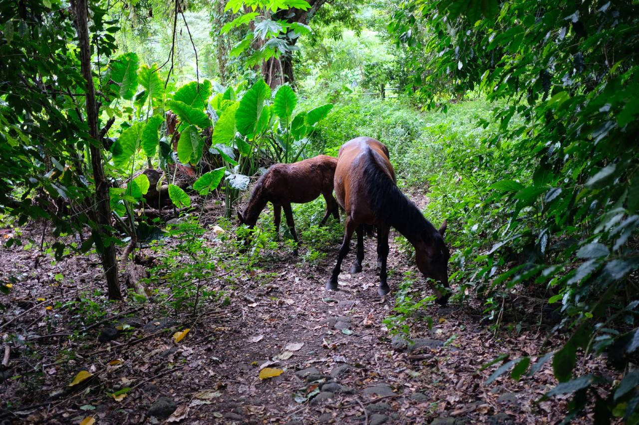 villhester-regnskogen-maggie-alva-green-house-mye-gir-mer