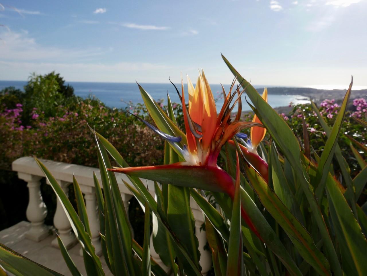 blomst-menton-utsikt-view-februar-cote-azur-green-house-by-anja-stang