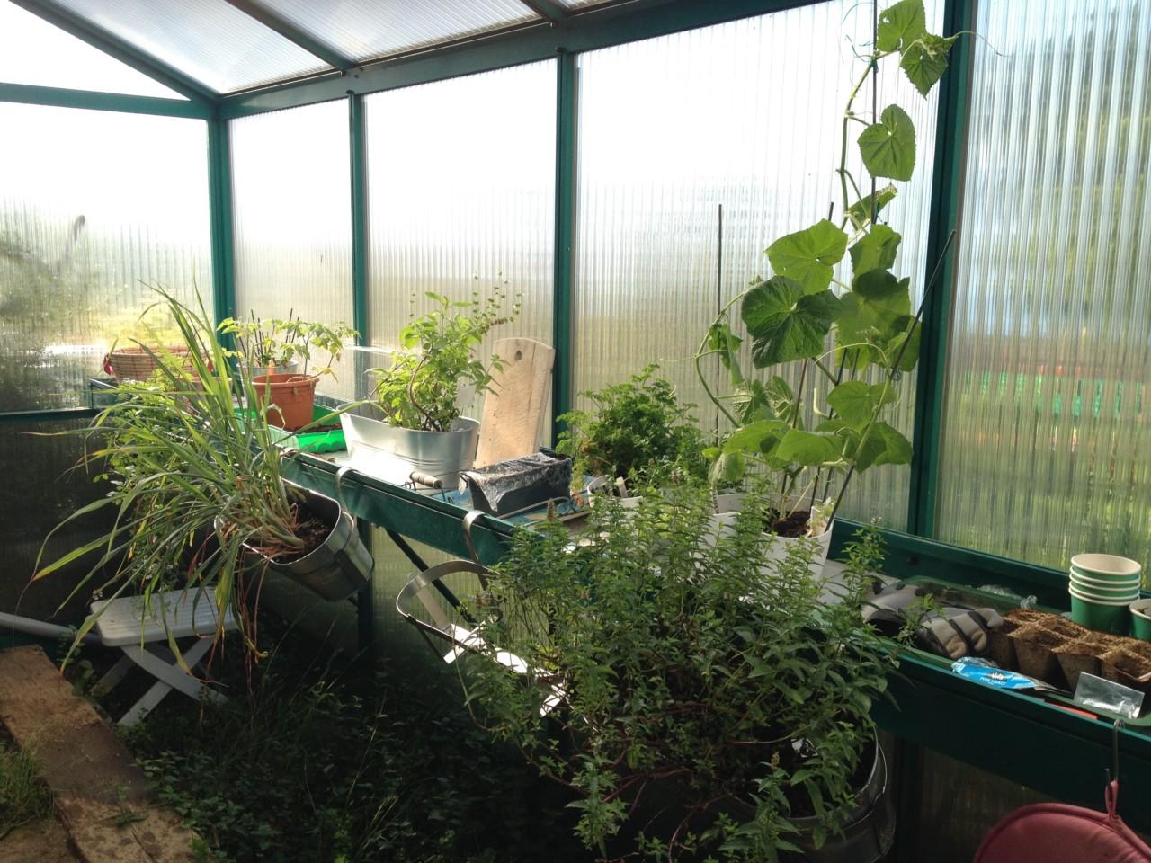 drivhus-nina-klungsoyr-fin-strek-gjesteinnlegg-green-house