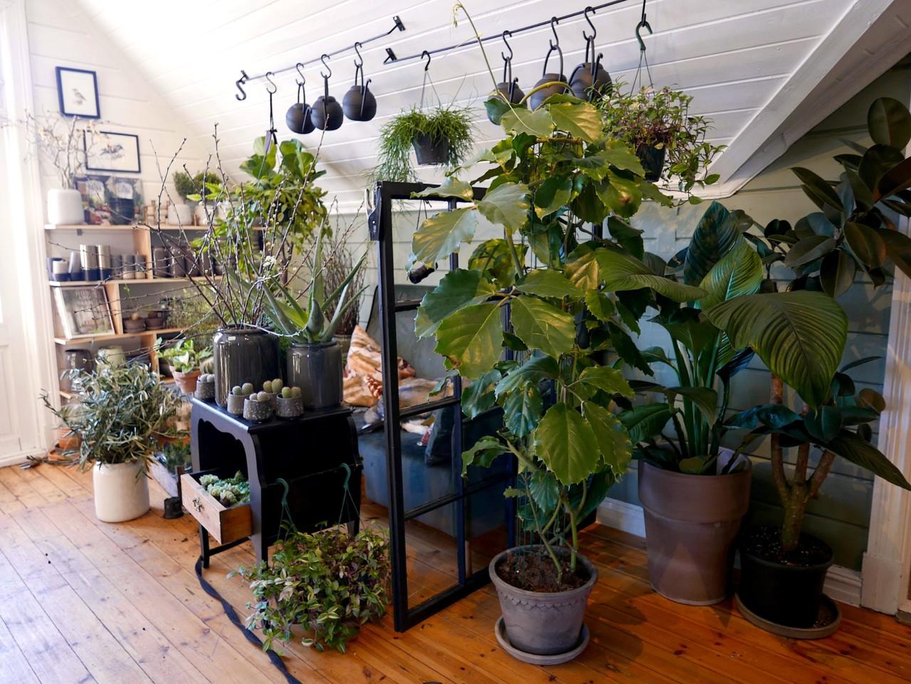 plantekafe-hellviktangen-green-house