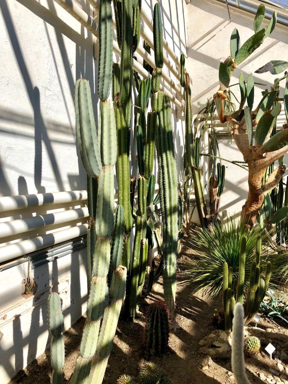 kaktus-botanisk-hage-oslo-palmehuset-green-house