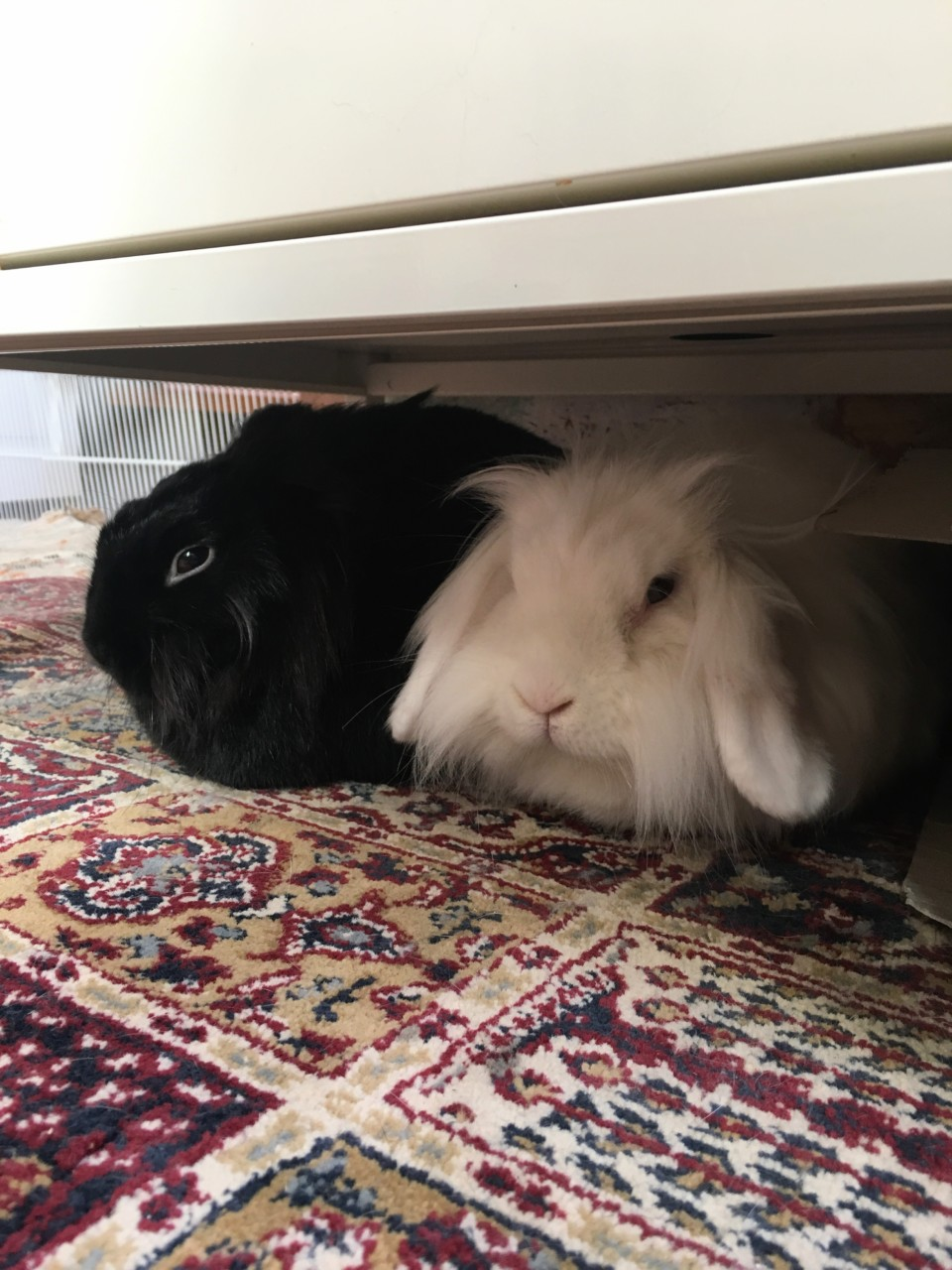 kaniner-maria-huseby-barekraftig-hjem