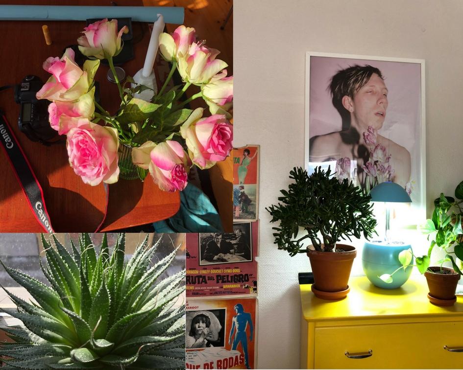 mille-fromyhr-leilighet-plant-lady-green-house