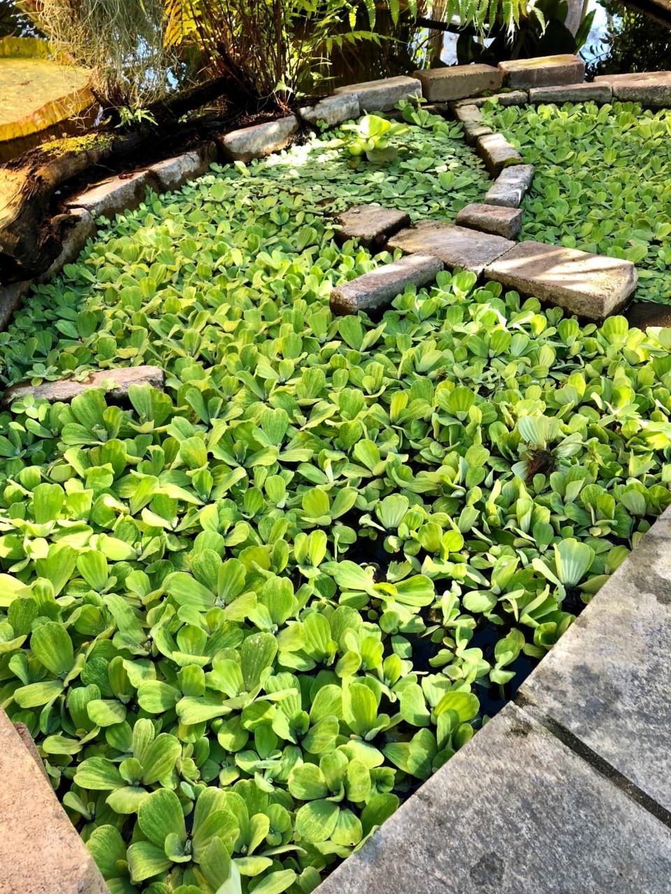 vann-salat-botanisk-hage-palmehuset-green-house
