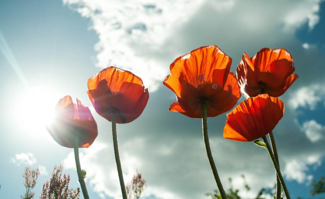 flower-maki-mack-pexels-frilufts-paradokset-green-house