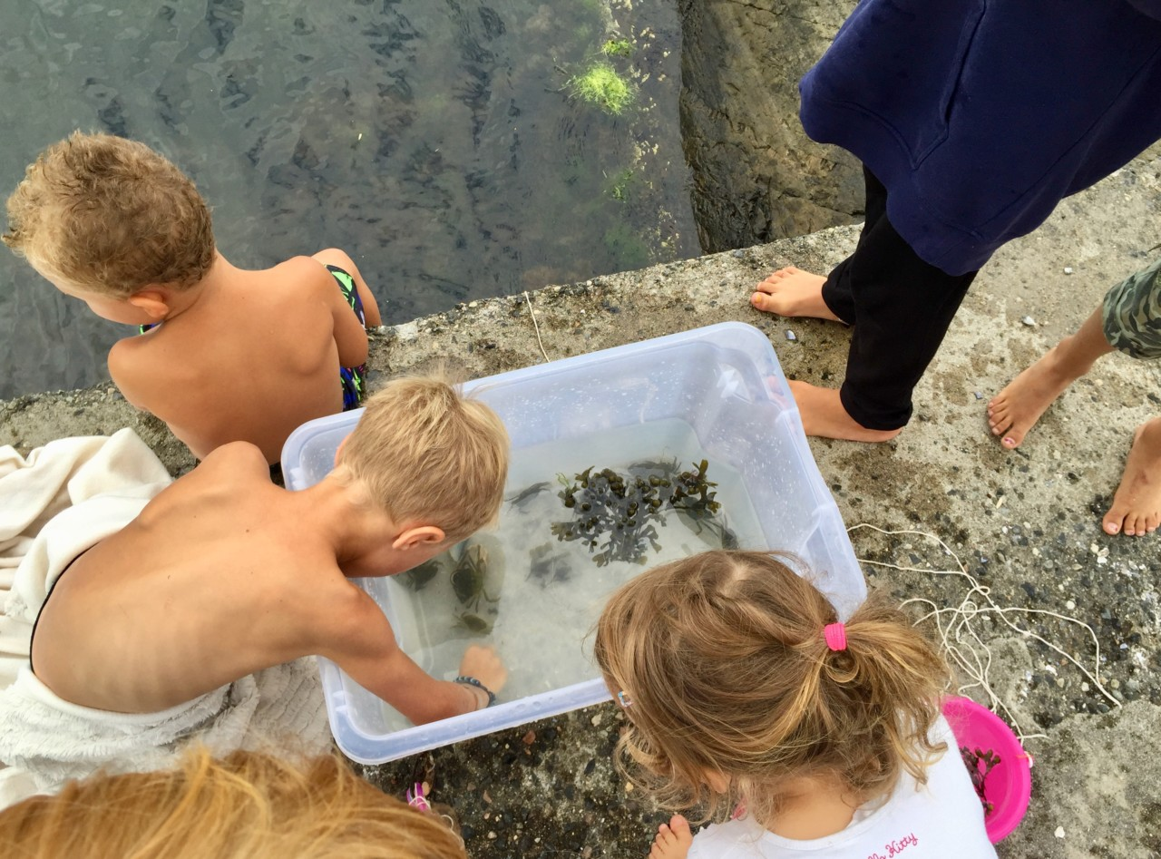 fange-krabber-sommer-strandryddedagen-nesodden-green-house
