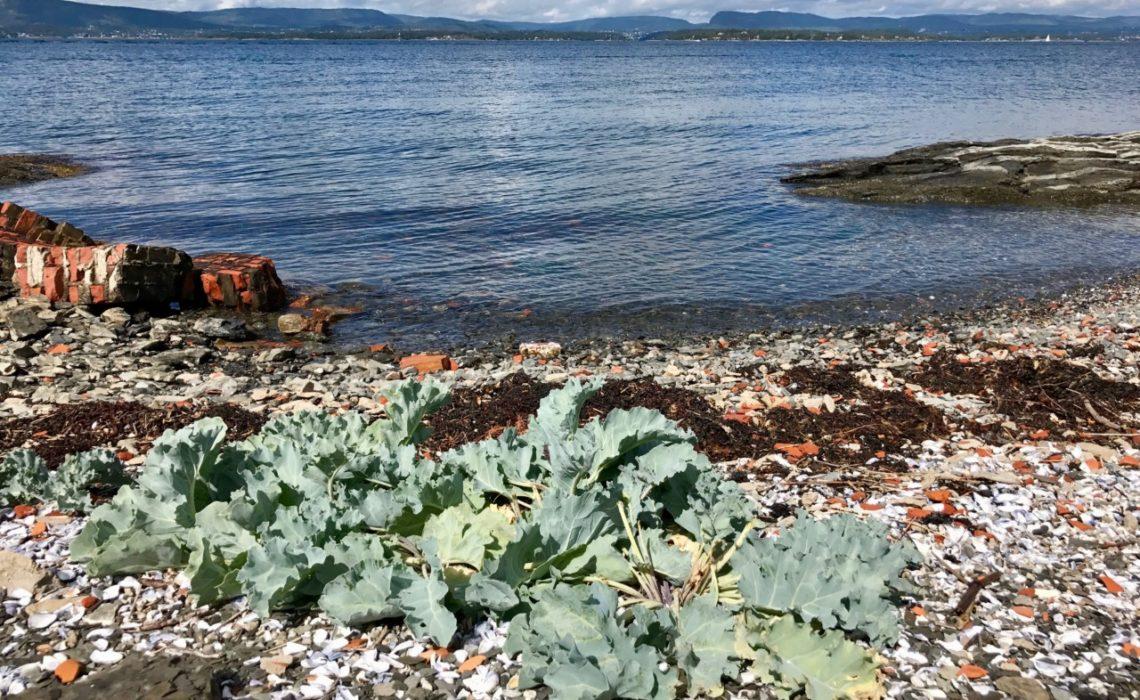 fyr-steilene-nesodden-strand-rydde-dagen-green-house
