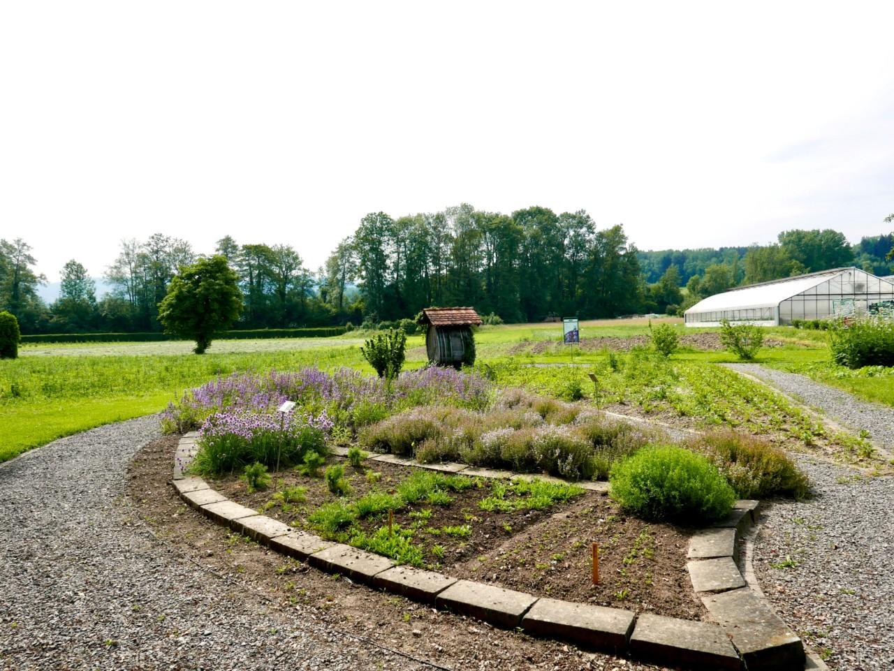solhatt-bioforce-salvie-lavendel-soma-green-house