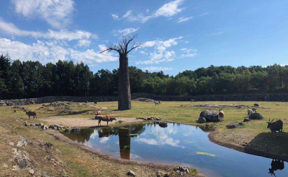 afrika-dyreparken-savanne-green-house