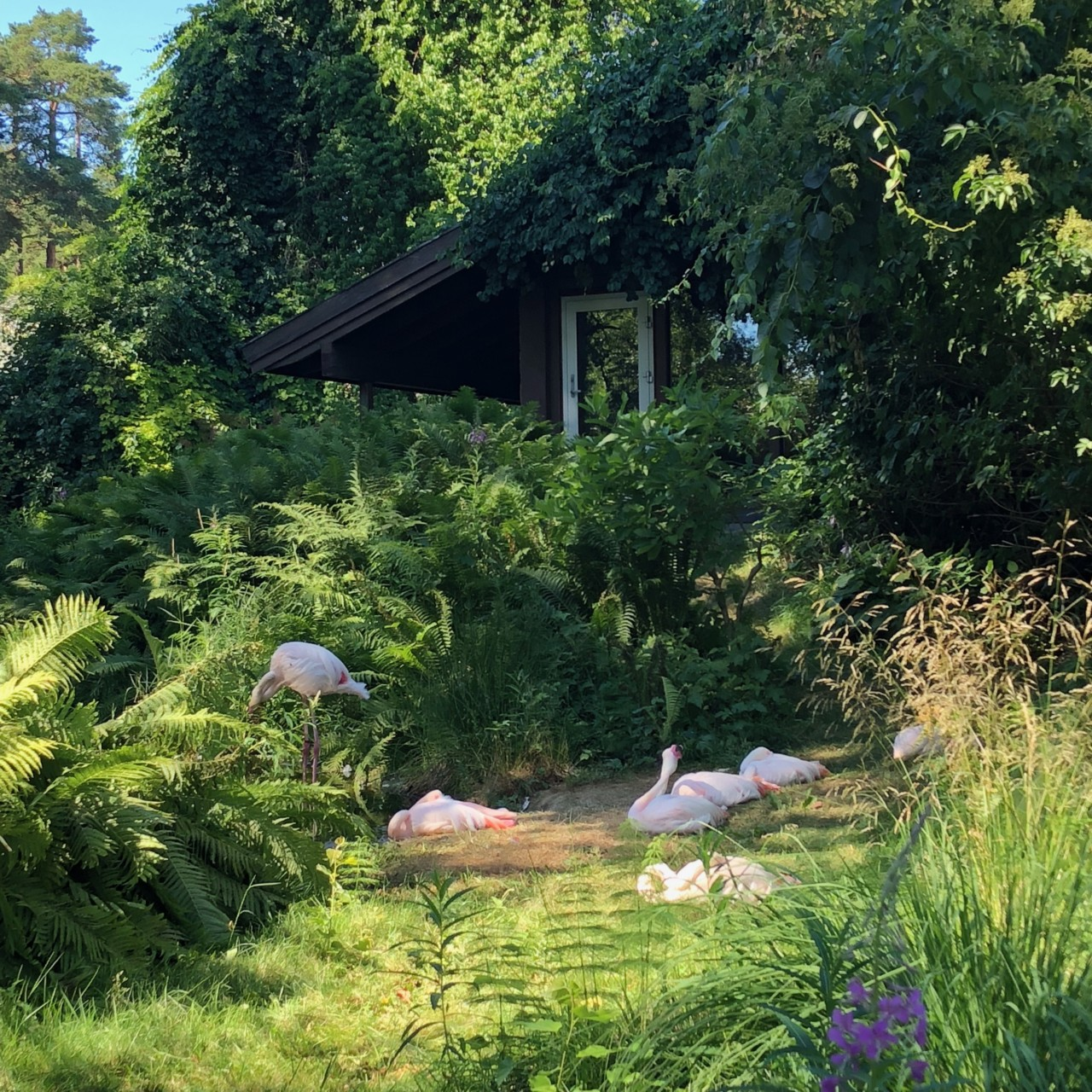 flamingoer-dyreparken-kristiansand-green-house