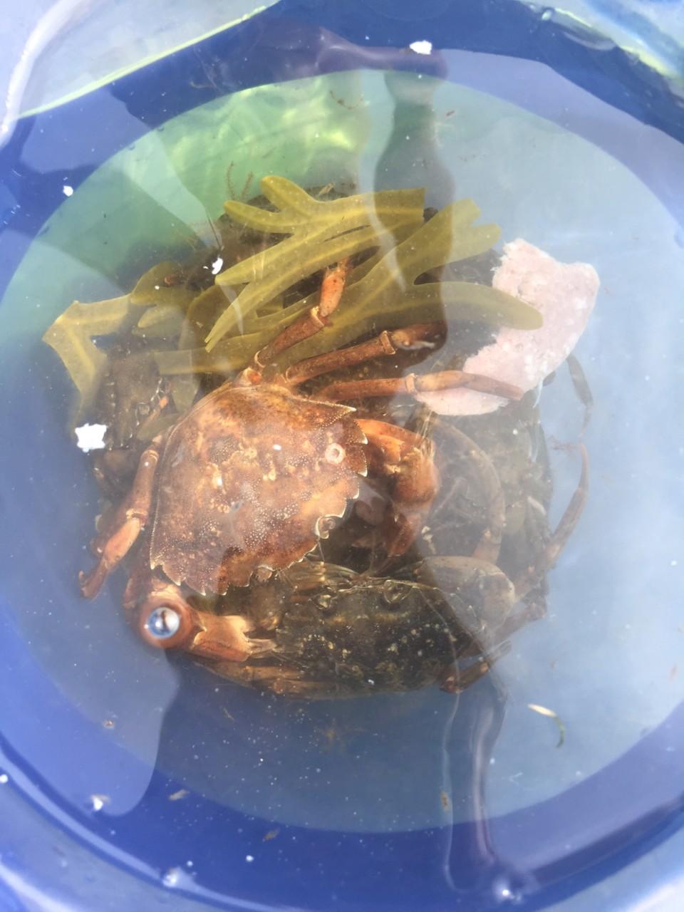 krabbe-fangst-tisvilde-andrea-rudolph-green-house