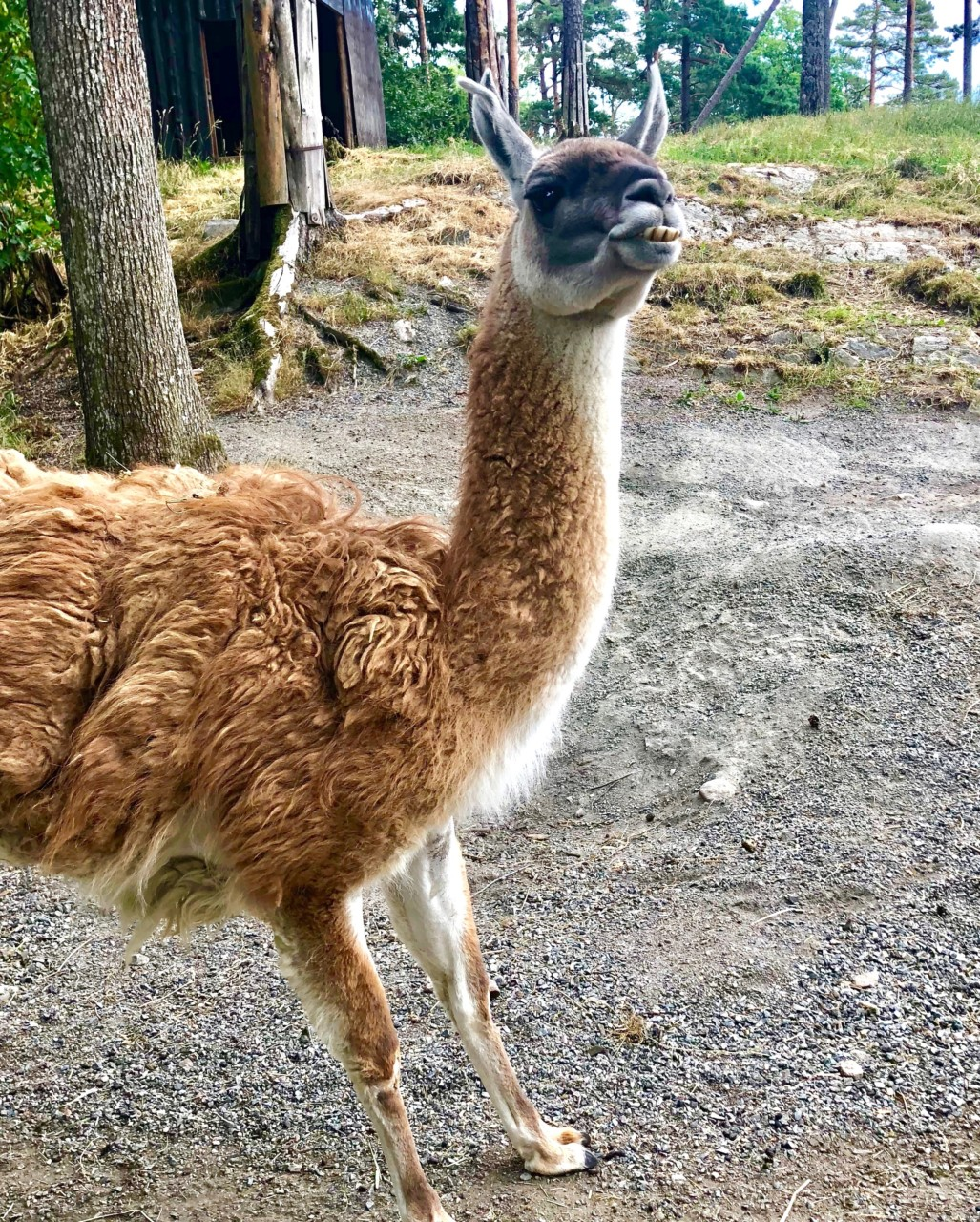 lama-dyreparken-kristiansand-green-house