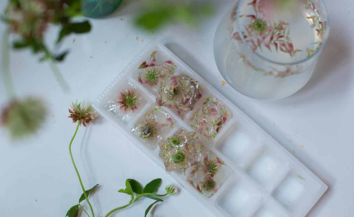 spiselige-blomster-isbiter-green-house