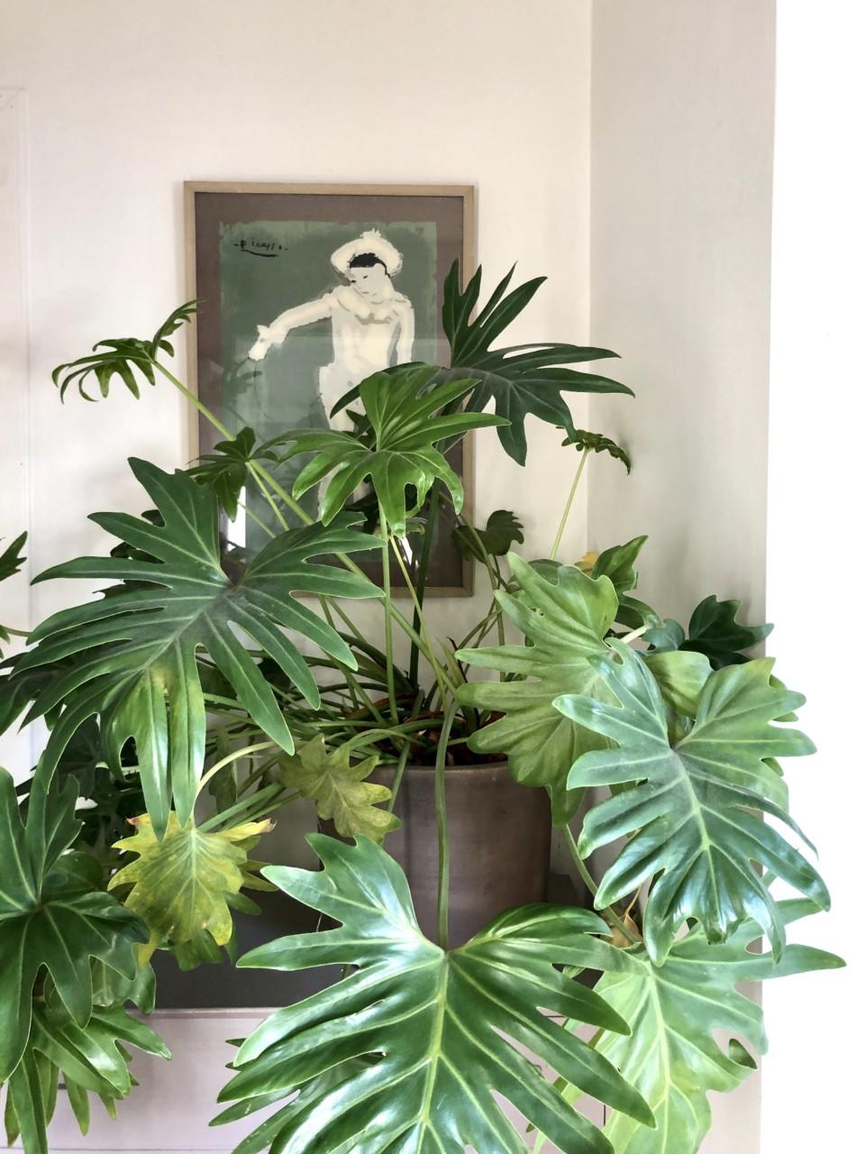 Fra plantenes skrekk til crazy plant lady: Mine beste tips