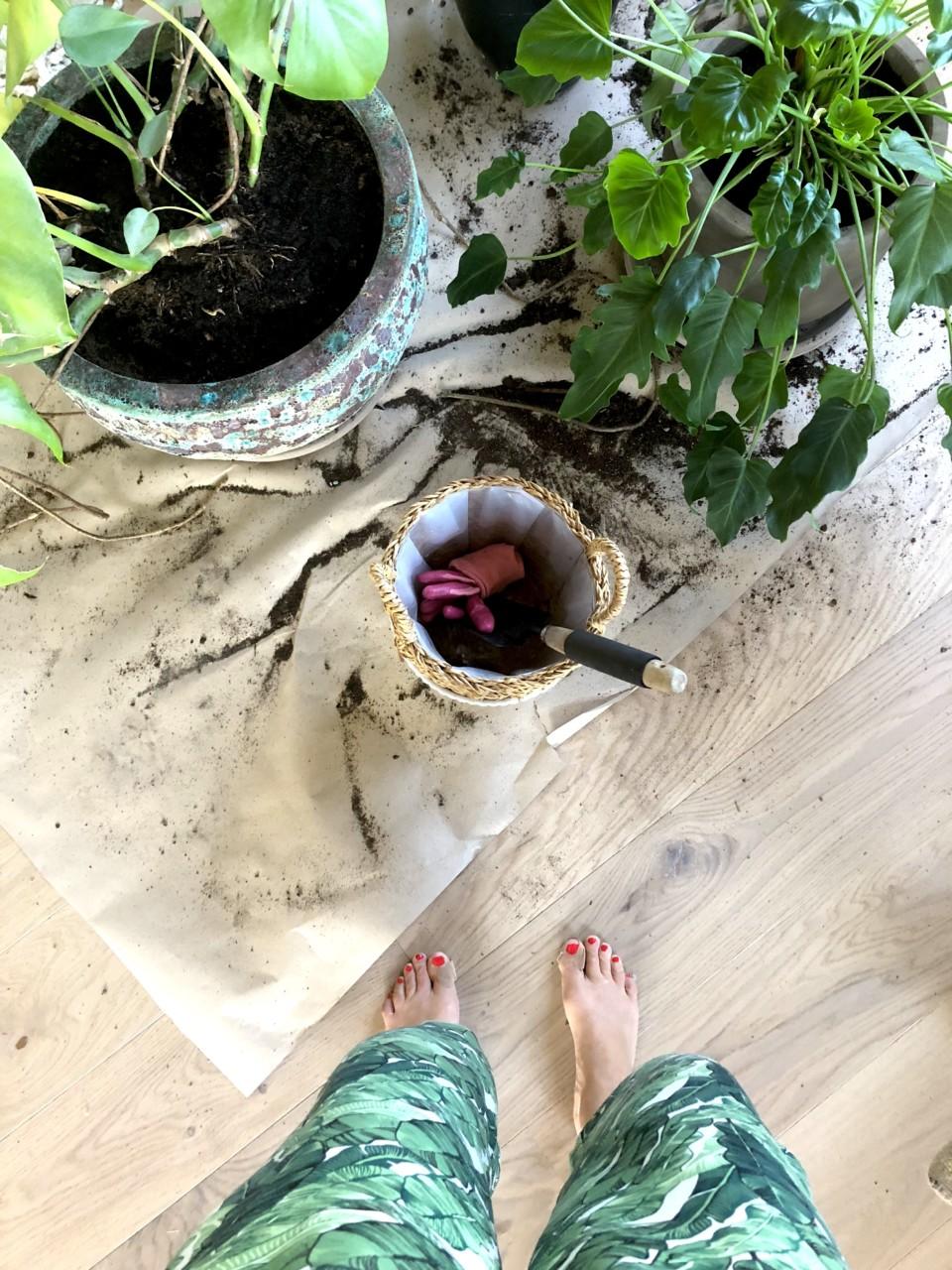 potte-om-krukkegården-plantetips-gronne-fingre-green-house