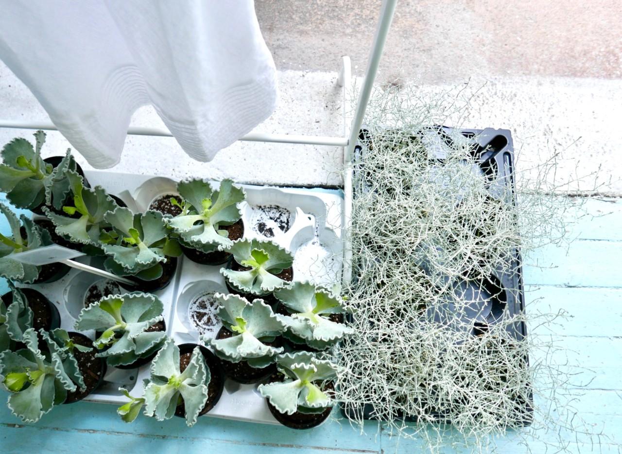 mina-milanda-vakkert-univers-naturlig-skjonnhet-green-house